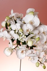 White_Orchid_Flower_Bouquet